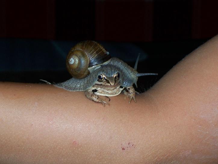 Лягушка и улитка