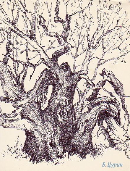 Дерево, рисунок Цурина Бориса