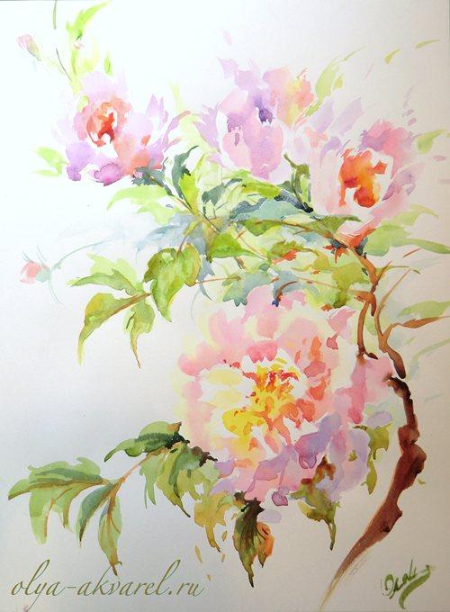 Цурина Ольга. ПОД УТРЕННИМ СОЛНЫШКОМ  (Розовые пионы), картина акварелью, 40х30